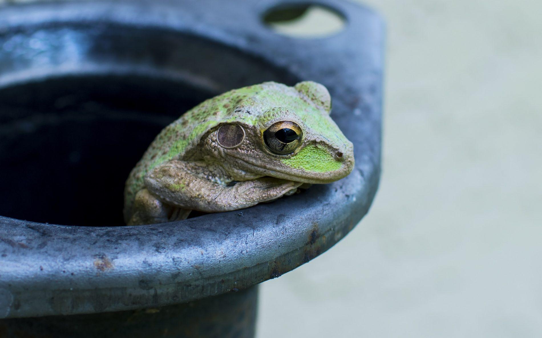 Schluss mit dem Frosch im Hals